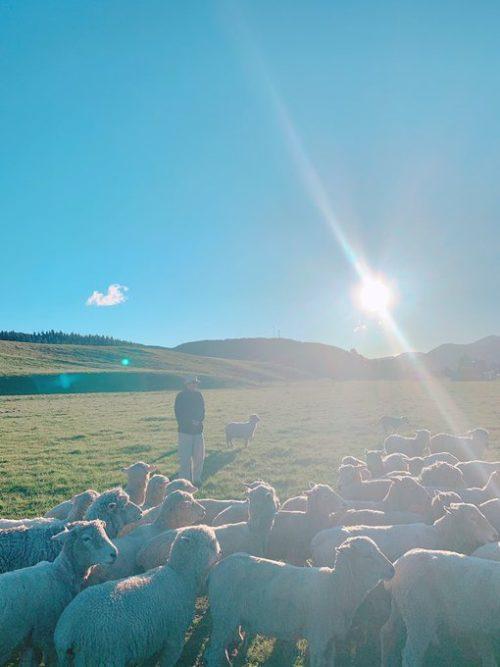 羊と戯れるテヒョン